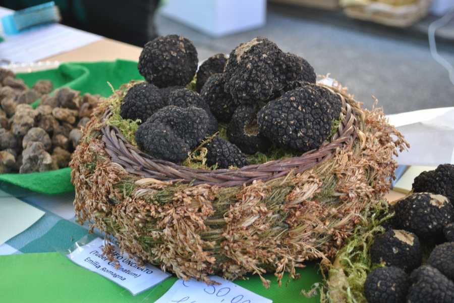 Bologna Welcome TRUFFLE EXPERIENCE TARTUFESTA 2019