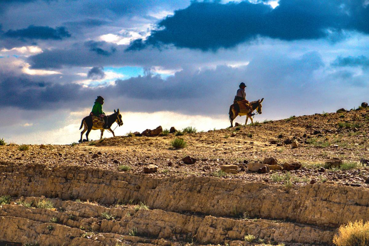 Wild-Trails Free Desert tour