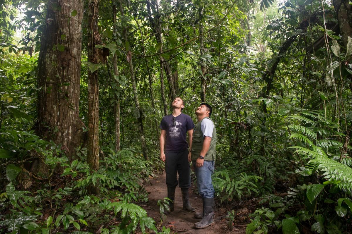 Late Bolivia AMAZONÍA: SELVA DEL PARQUE MADIDI