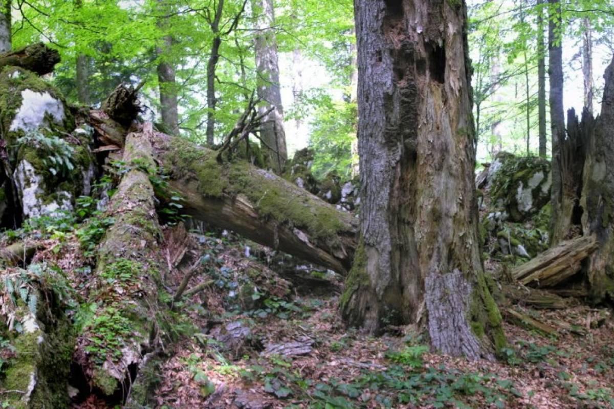 """Degenija Tours Hiking Tour Čorkova uvala """"jungle forest"""""""
