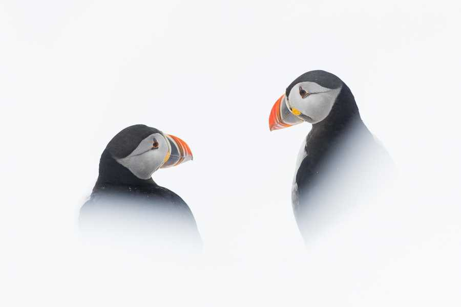 WildPhoto Norway Arctic Birds (FULLY BOOKED)