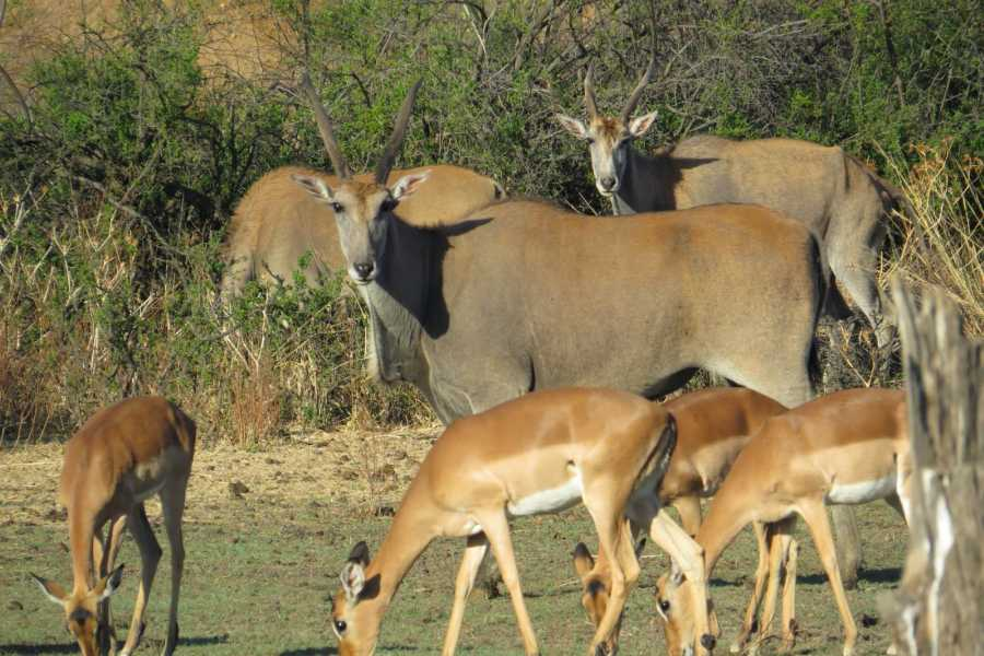 e-Tourism t/a SimplyTravel Gaborone Game Reserve