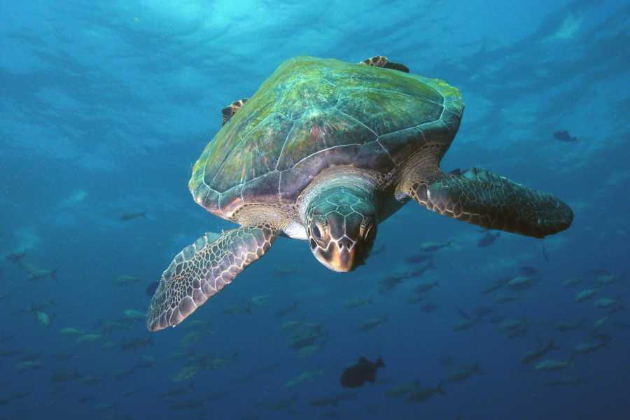 Aquanauts Grenada All-Inclusive Stay & Dive Package