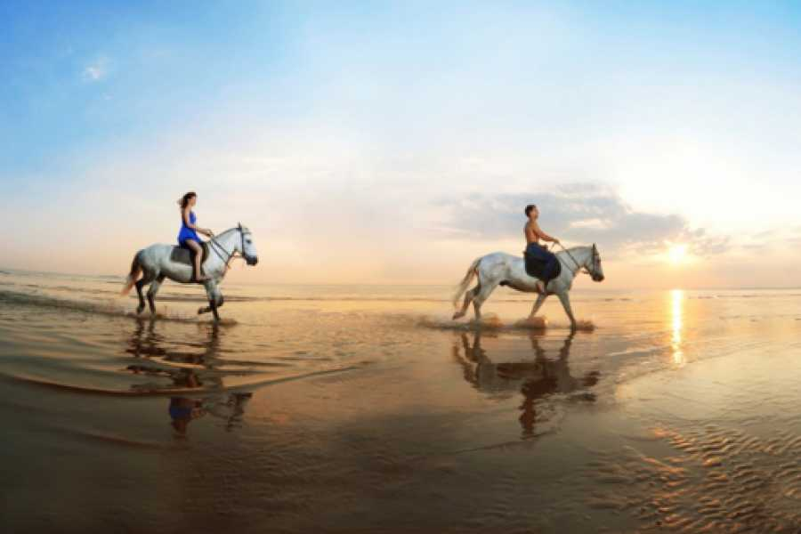 Pura Vida Casas Adventures Horseback Riding Adventures