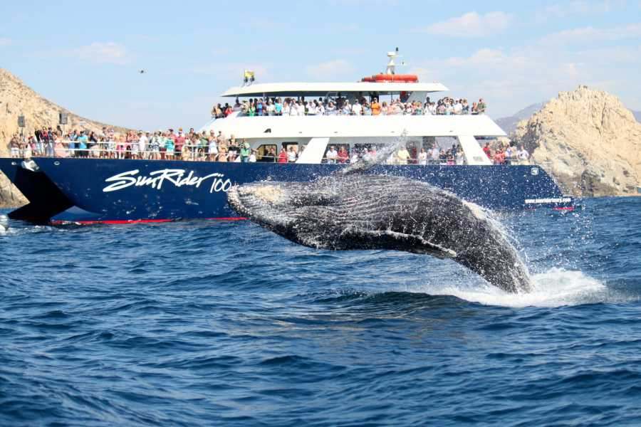 Pacifico Tours SA de CV Whale Watching Brunch and Transfer