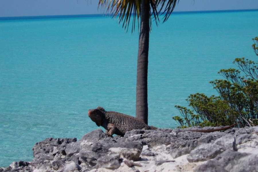 TheRealBahamas LLC Exuma - George Town: 8 Hr  White Cay Runaway Charter: Off Island Boat Tours
