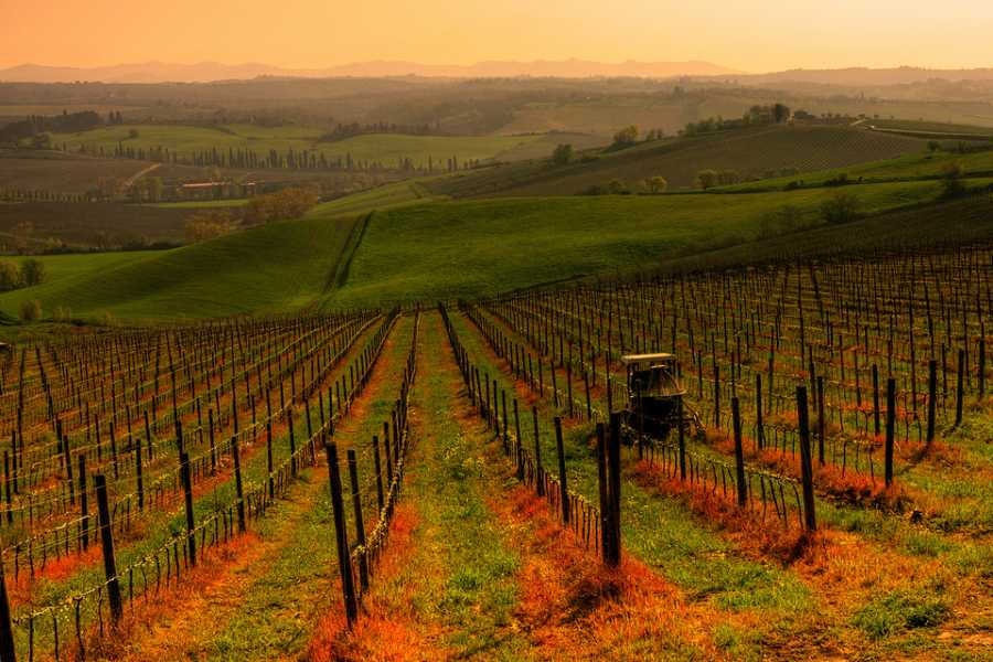 ACCORD Italy Smart Tours & Experiences CHIANTI COLOURS & FLAVOURS - BY BUS