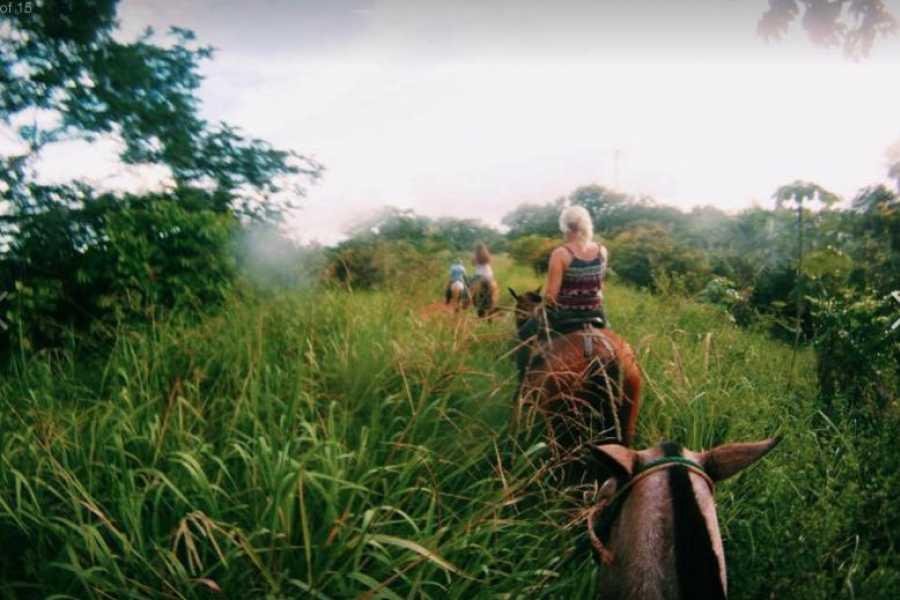Pura Vida Casas Adventures HORSEBACK RIDING: DEL PACIFICO RANCH