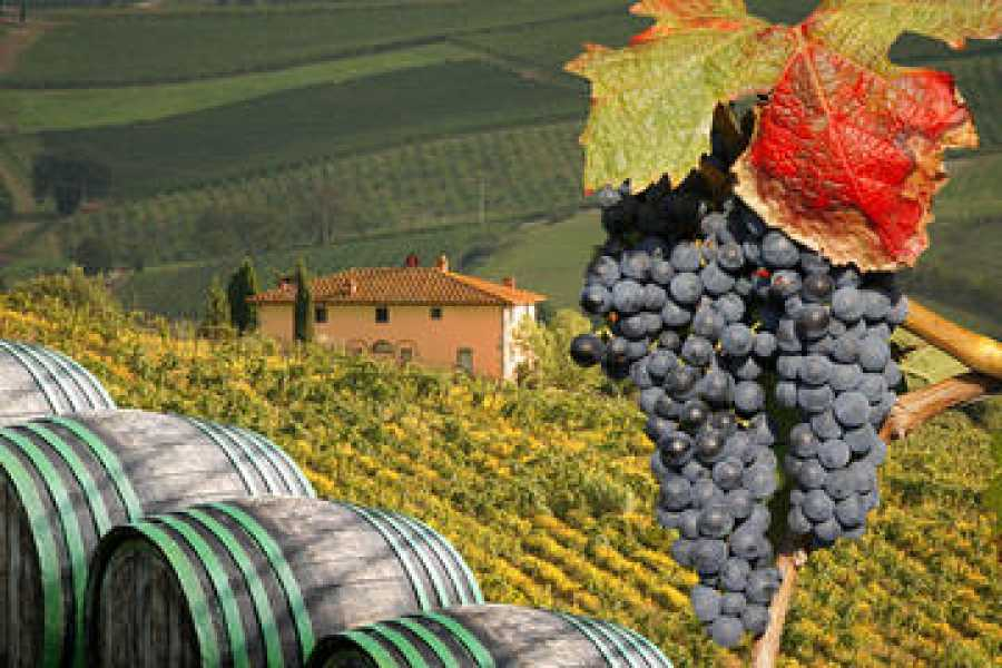 ACCORD Italy Smart Tours & Experiences PRIVATE TOUR CHIANTI WINE GRAND TOUR