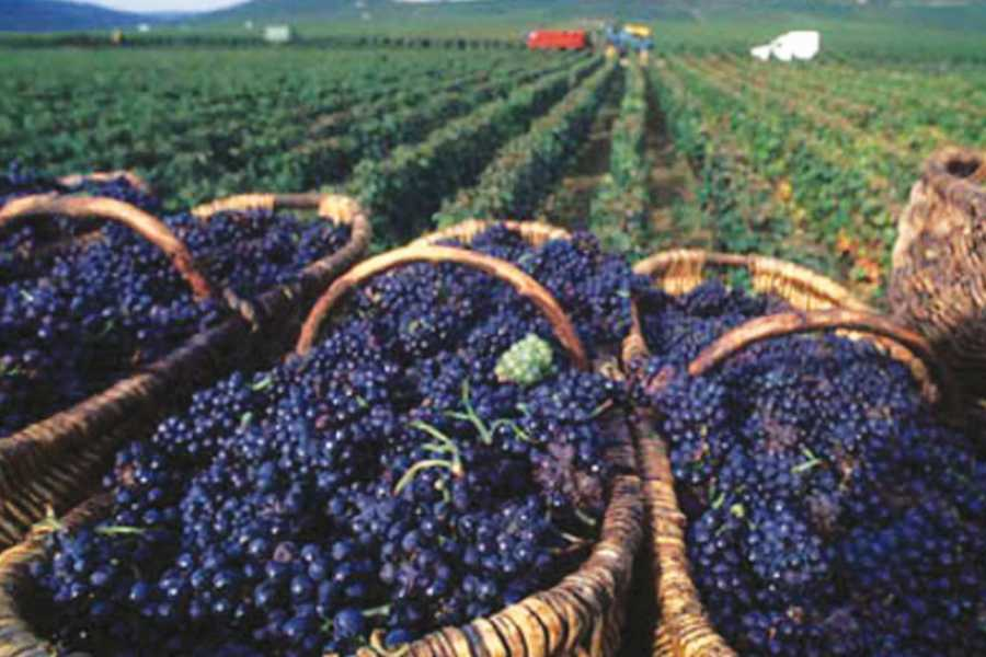 ACCORD Italy Smart Tours & Experiences PRIVATE CHIANTI WINE TOUR
