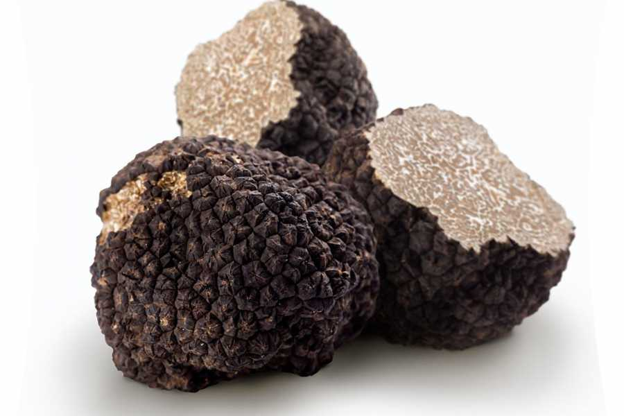 ACCORD Italy Smart Tours & Experiences TRUFFLE HUNTING IN THE FLORENTINE HILLS - PRIVATE TOUR