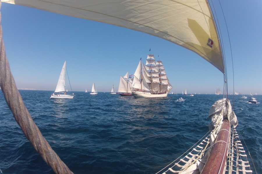 Maybe Sailing International Tall Ship Races. Cruise in Company