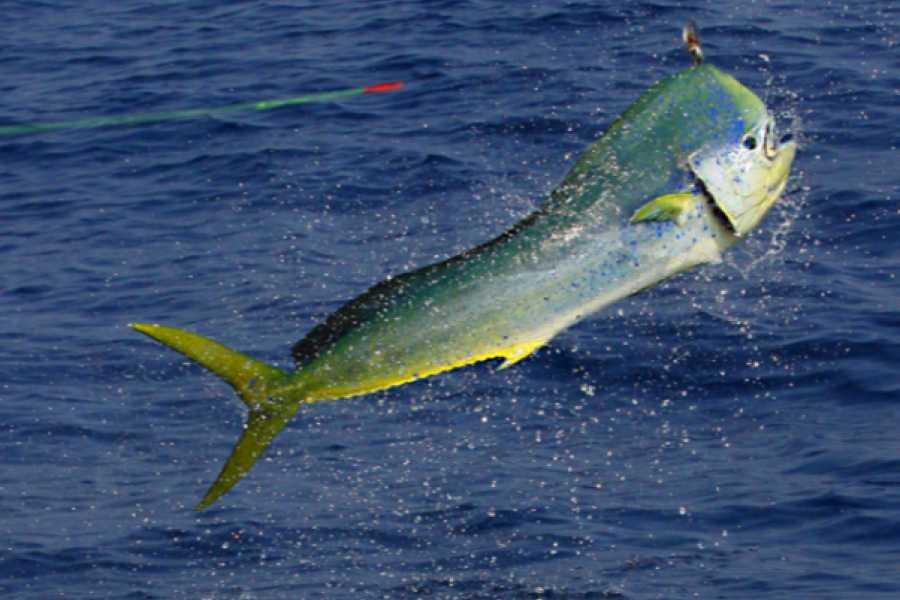 PlayaFlamingo.com Three-Hour Inshore Fishing Trip