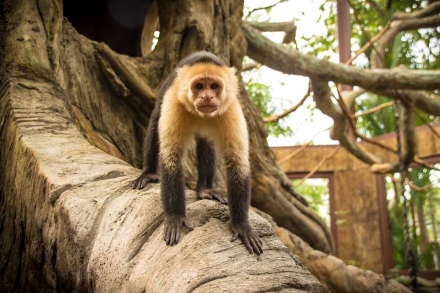 Tour Guanacaste Diamante Animal Sanctuary Discovery Pass