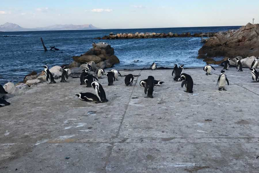 capefriendlytours WHALE WATCHING