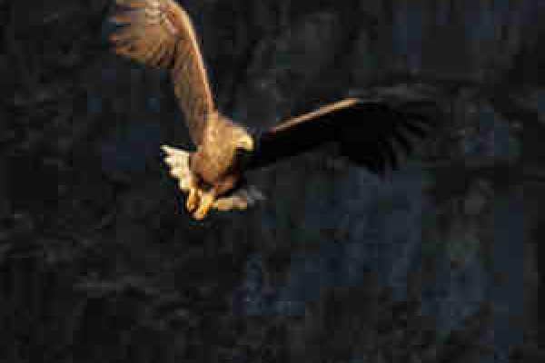 Nature/sea eagle safari