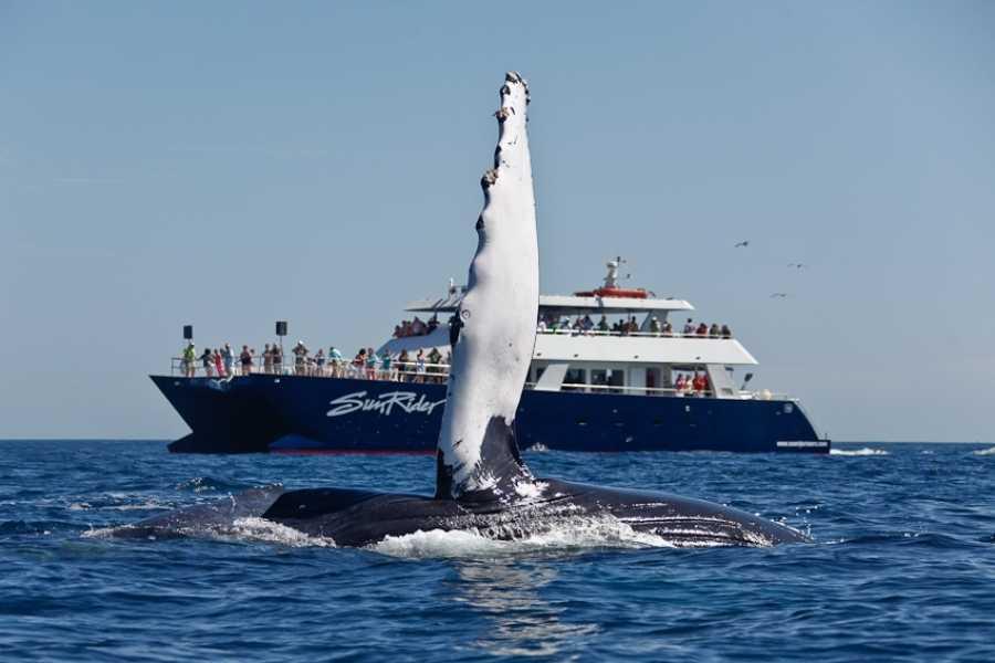 Pacifico Tours SA de CV Whale Watching Dinner
