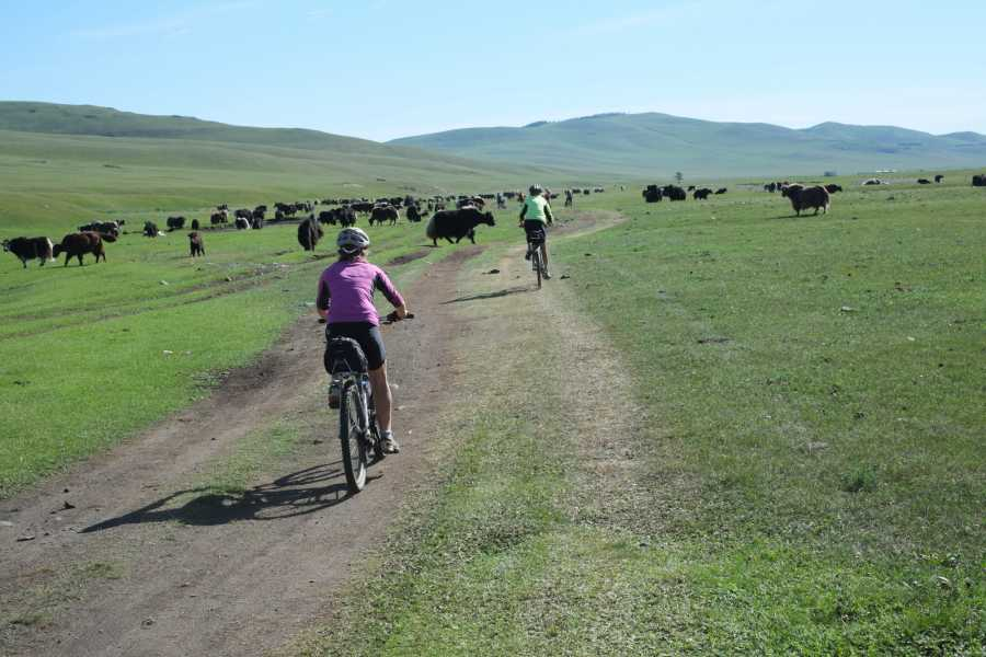 The Great Mongolian Adventures Khangai Mountain Biking 11 Days