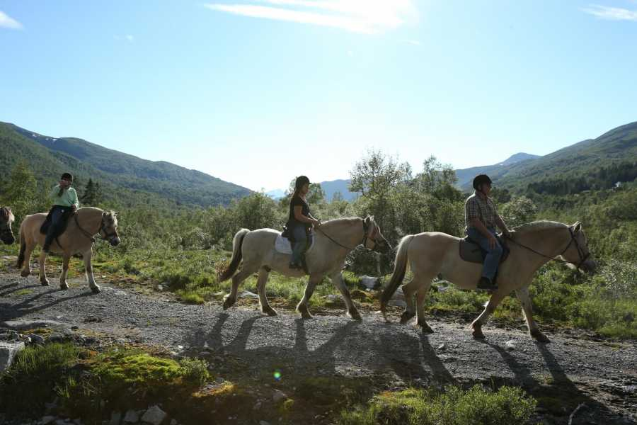 Norsk Fjordhestsenter Riding trips in Hjelmelandsdalen valley, afternoons at 16.00