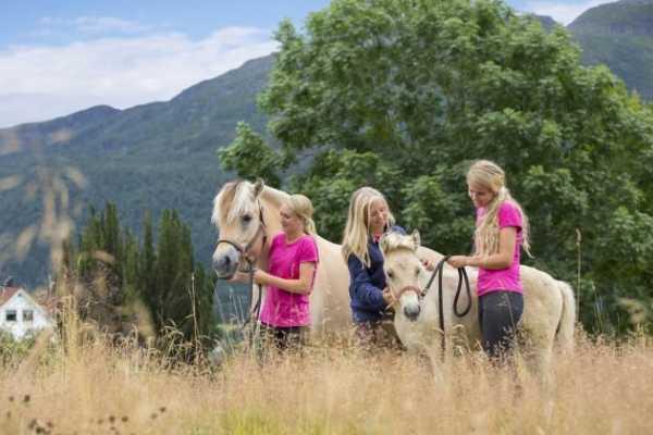 Norsk Fjordhestsenter Hand-led riding trips