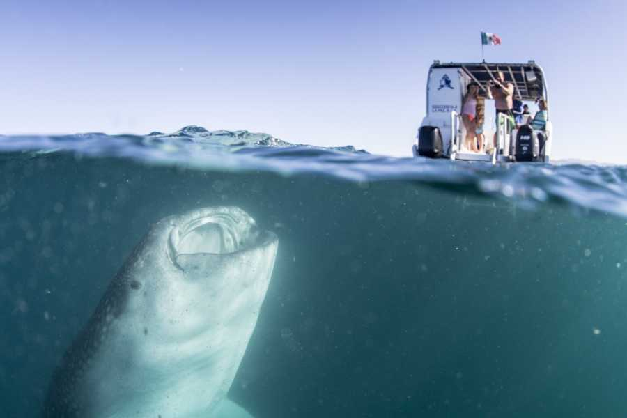 Pacifico Tours SA de CV La Paz Swimming with Whale Shark & Transportation