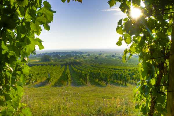 Vienna Explorer - Tours and Day Trips Private Burgenland Gourmet Tour
