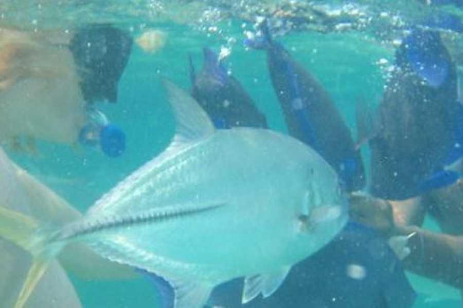 Coral Divers Belize Snorkeling