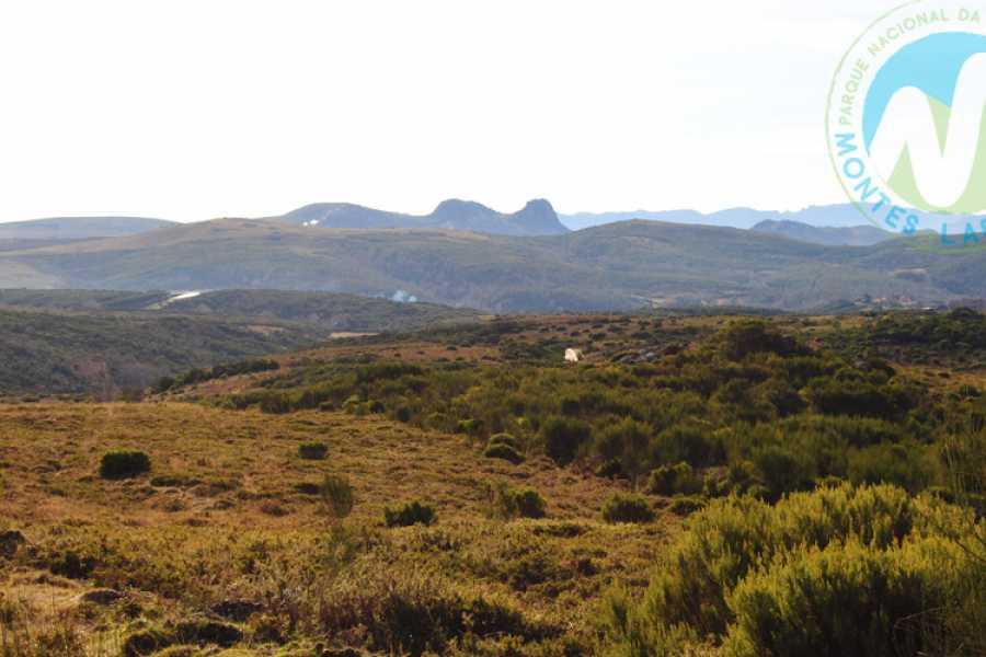 Gerês Holidays Iberian Wolf Tour