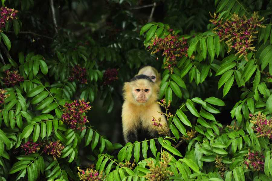 Aventuras 2000 PIANC18 - Rainforest Tour (Aerial Tram & Monkey Watch)