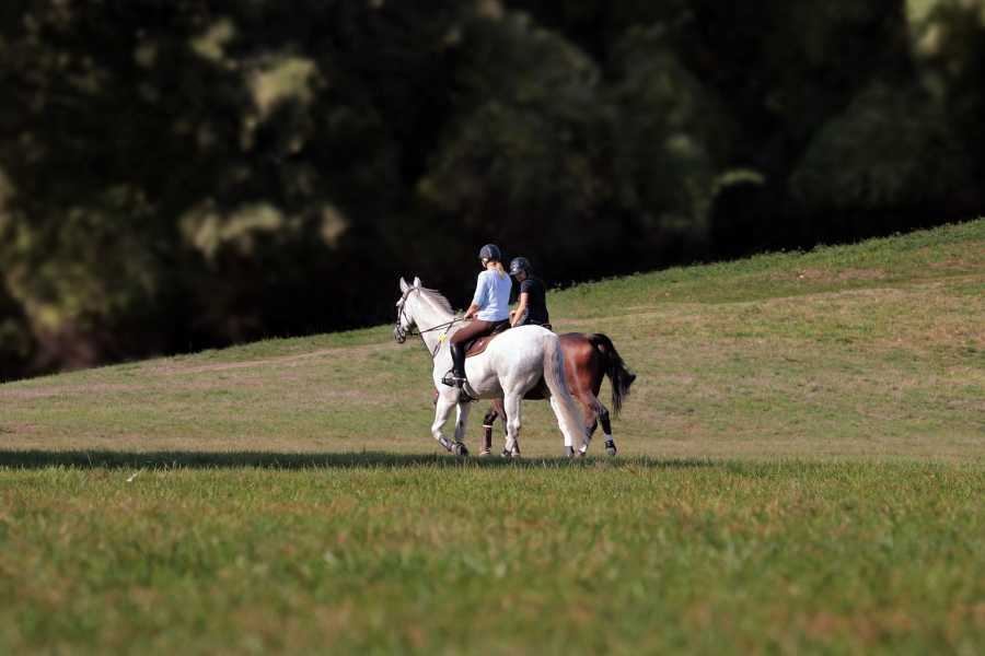 ACCORD Italy Smart Tours & Experiences TOUR A CAVALLO NEL CHIANTI