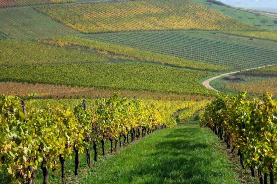 ACCORD Italy Smart Tours & Experiences TOUR NEL CHIANTI CON CENA ROMANTICA - TOUR DI GRUPPO
