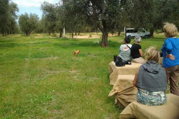 Destination Apulia OIL TASTING E PIC-NIC IN CAMPO