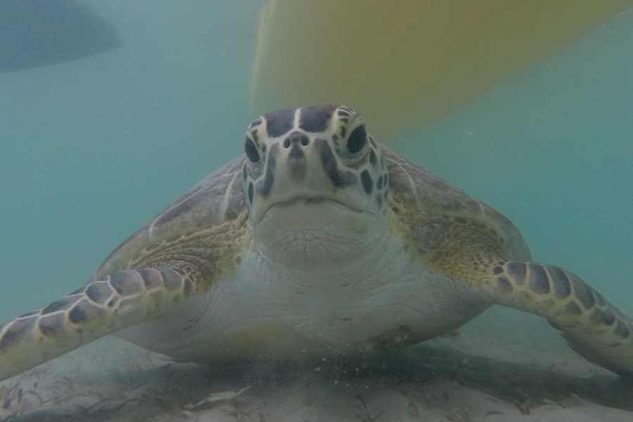 Eleuthera Adventure Tours Ltd. Time for Da Turtle Tour