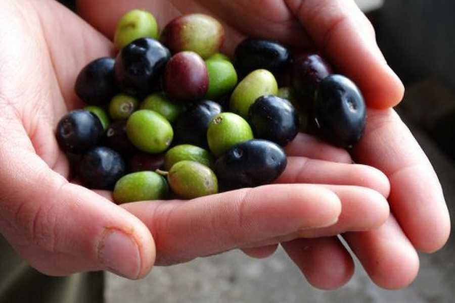 Enjoy Chianti Chianti Treasure: Terracotta, Wine, Olive Oil tour