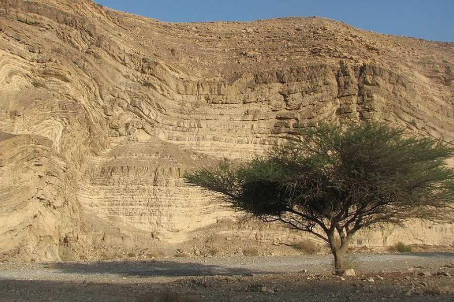 Desert-Pass Family Rappelling Activity - Ramon Cliff