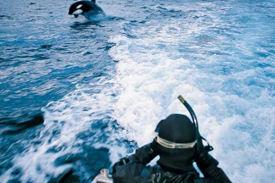 Strømsholmen Sjøsportsenter A/S Orca Expedition, MS Aafjord