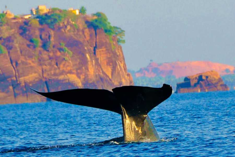 Cinnamon Holidays Private Limited Marine Mammal Watching - Trinco