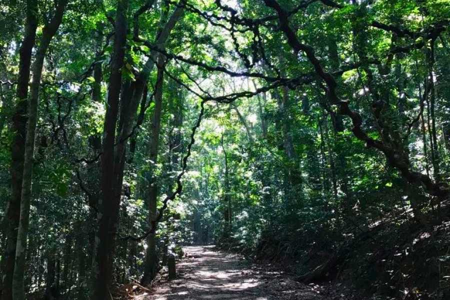 Cinnamon Holidays Private Limited Udawattakele Forest Trek - Kandy