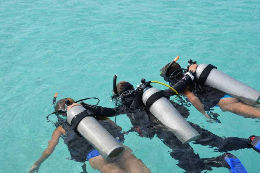 Coral divers PADI Discover Scuba Dive