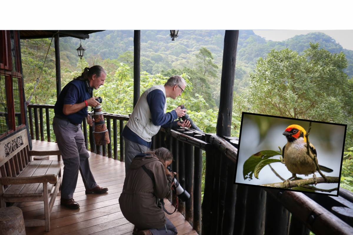 Andes Ecotours Birdwatching: Chicaque Cloud Forest (2 days)