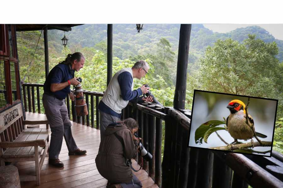 Andes Ecotours Chicaque Cloud Forest Birdwatching (1+ days)