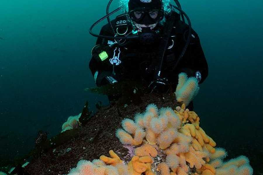 Strømsholmen Sjøsportsenter A/S Diving Trip, short trip