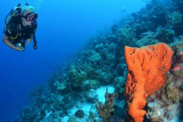 Coral divers Refresher Dive