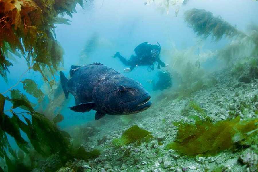 """Coral divers PADI """"Aware Fish ID"""" Specialtiy"""