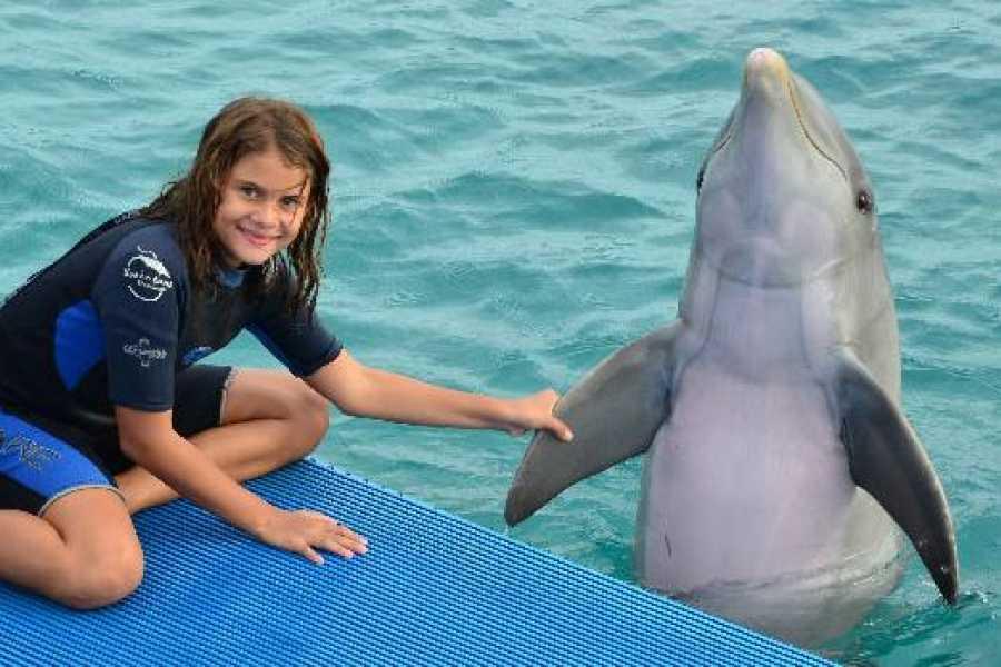 Coral divers Ontmoet de Dolfijnen