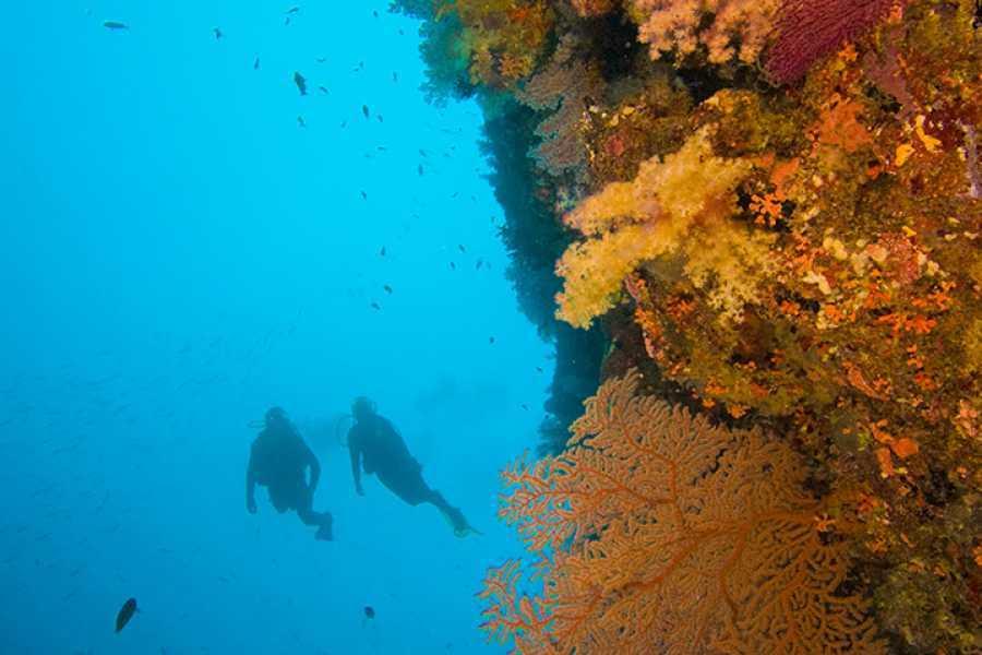 Coral divers PADI Deep Diver Specialty