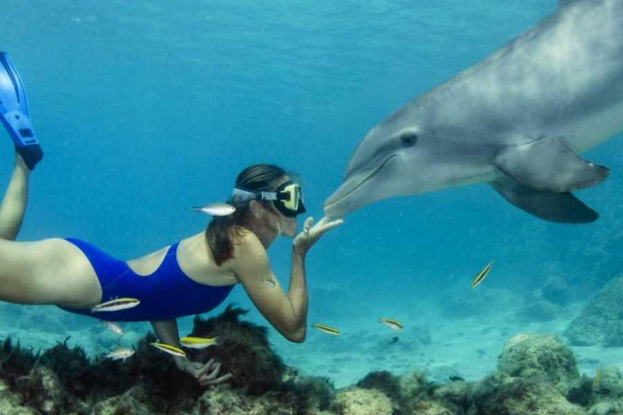 Coral divers Dolphin Freedive