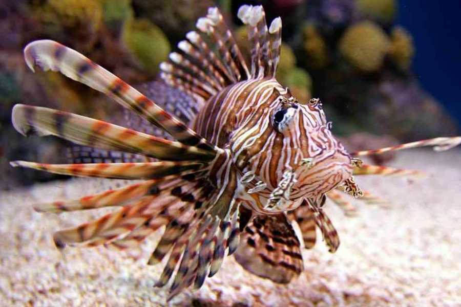 Coral divers Lion Fish jacht ervaring