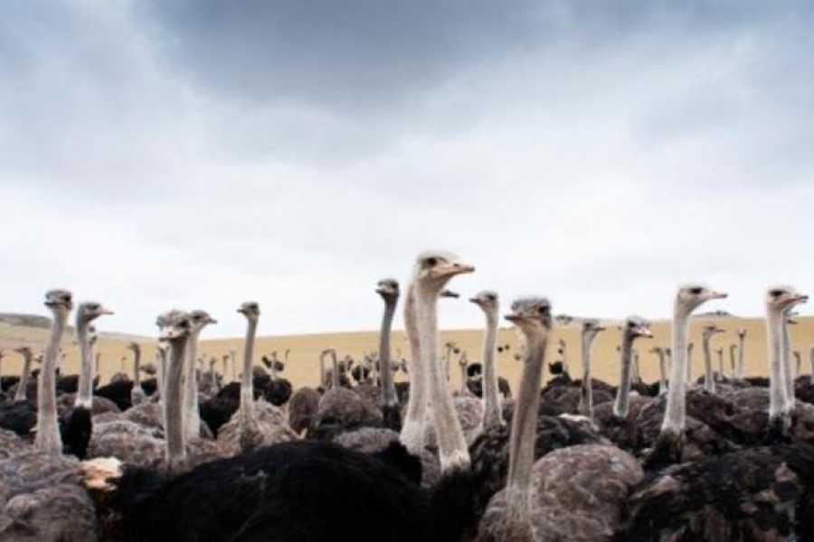 Coral divers Ostrich Farm