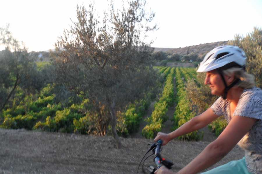 Evia Adventure Tours MTB / Vineyards & Mountains of Chalkis